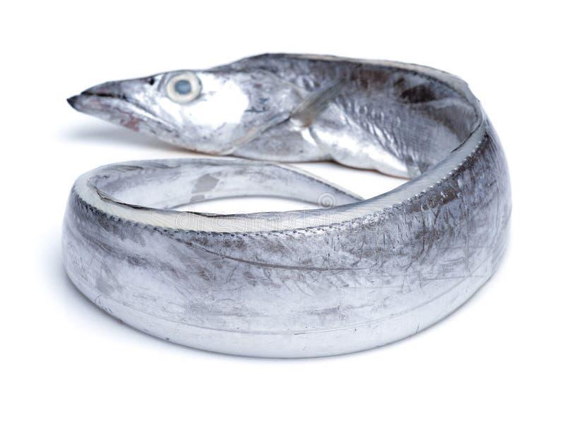 Peixes asiáticos da fita imagens de stock royalty free