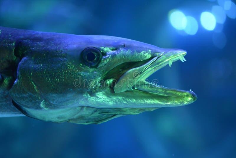 Peixes assustadores com theeth afiado imagem de stock
