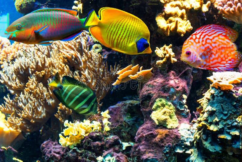 Peixes bonitos coloridos e paisagens subaquáticas no mar imagens de stock