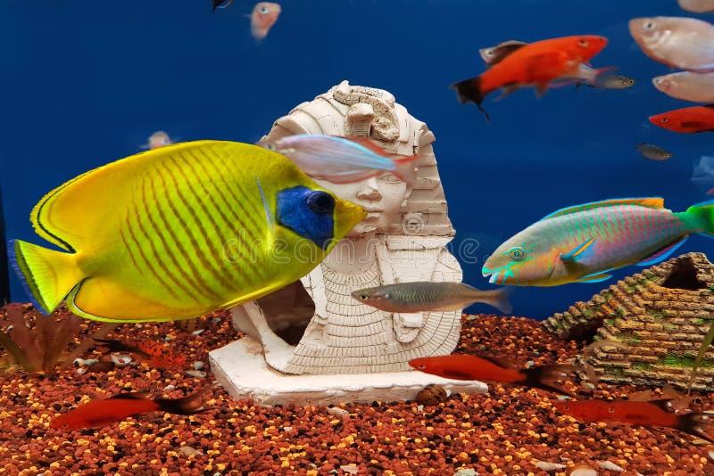 Peixes bonitos coloridos e paisagens subaquáticas no mar imagem de stock