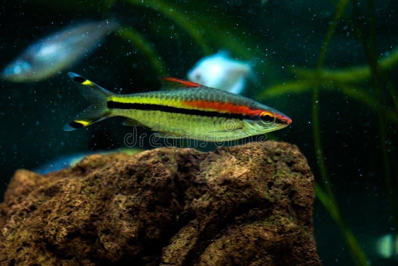 Download Peixes bonitos no aquário imagem de stock. Imagem de natação - 80101195