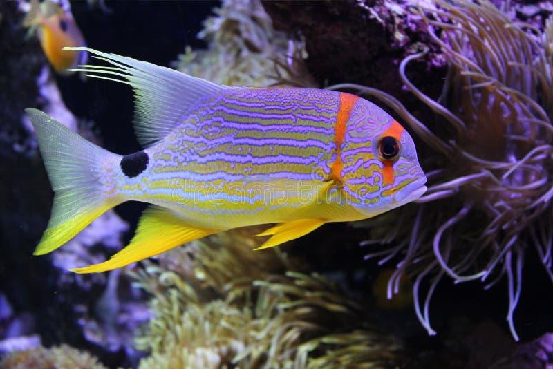 Peixes bonitos sob o mar fotografia de stock