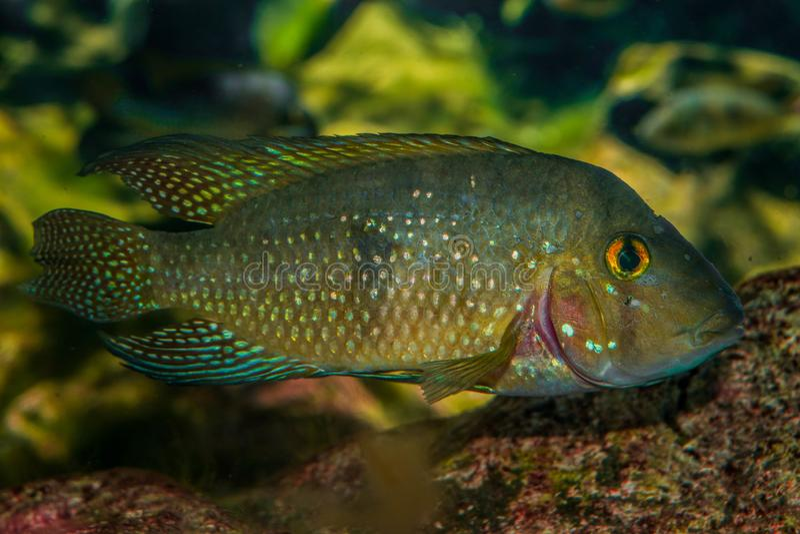 Peixes coloridos bonitos no mundo do mar imagens de stock royalty free