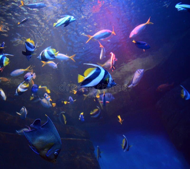 Peixes coloridos da foto na água azul no aquário fotos de stock royalty free