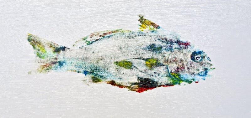Peixes coloridos do grasnador imagens de stock