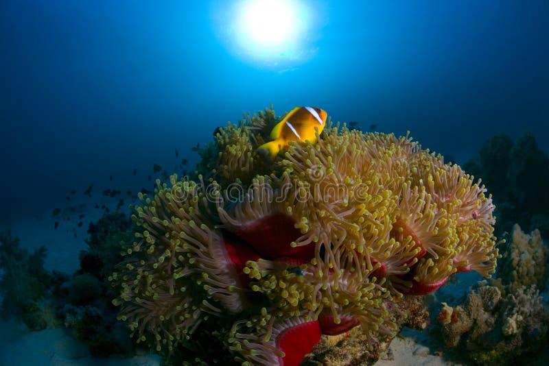 Peixes coloridos entre o recife coral imagem de stock royalty free