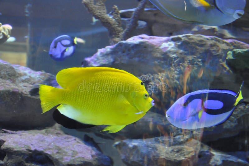 Peixes coloridos no aquário de dois oceanos imagem de stock royalty free