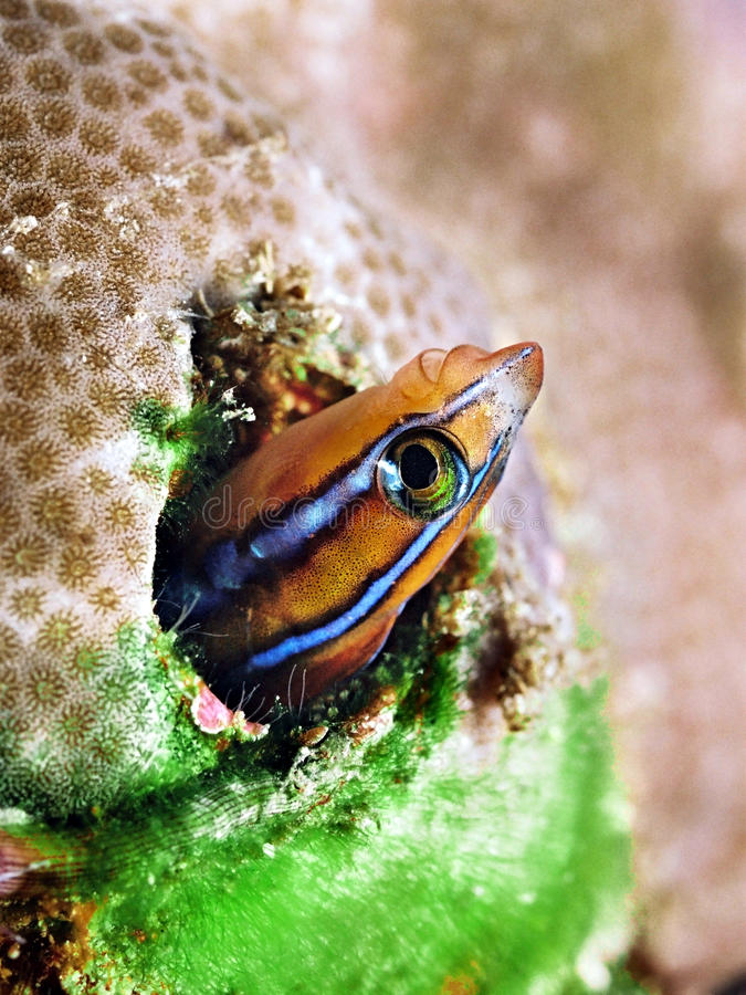 Peixes coloridos no recife coral fotografia de stock royalty free