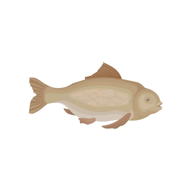 Peixes com aletas marrons Criatura marinha Habitante do oceano Animal de mar Vetor liso para o empacotamento ou o promo do produt ilustração royalty free