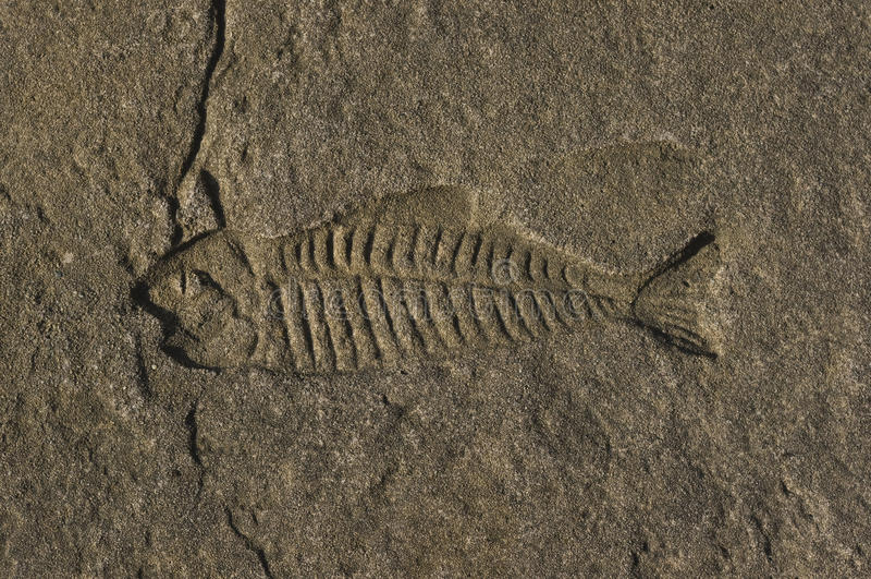 Peixes com o osso no imprint concreto fotografia de stock