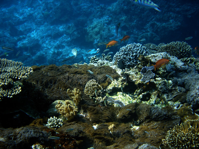 Peixes corais da colônia e do coral. imagens de stock royalty free