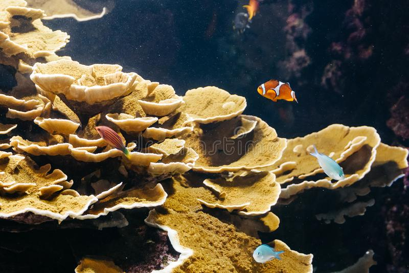 Peixes corais pequenos imagem de stock