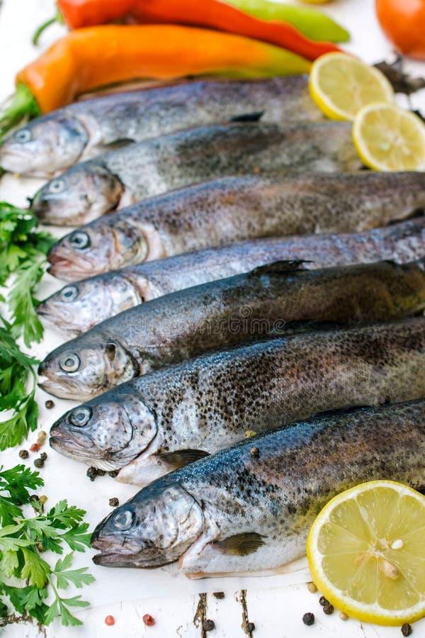 Peixes crus da truta imagem de stock
