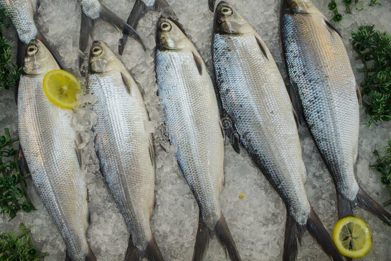Peixes crus no gelo com os limões Cavala do mar na pilha para a venda e o cozinheiro fotografia de stock royalty free