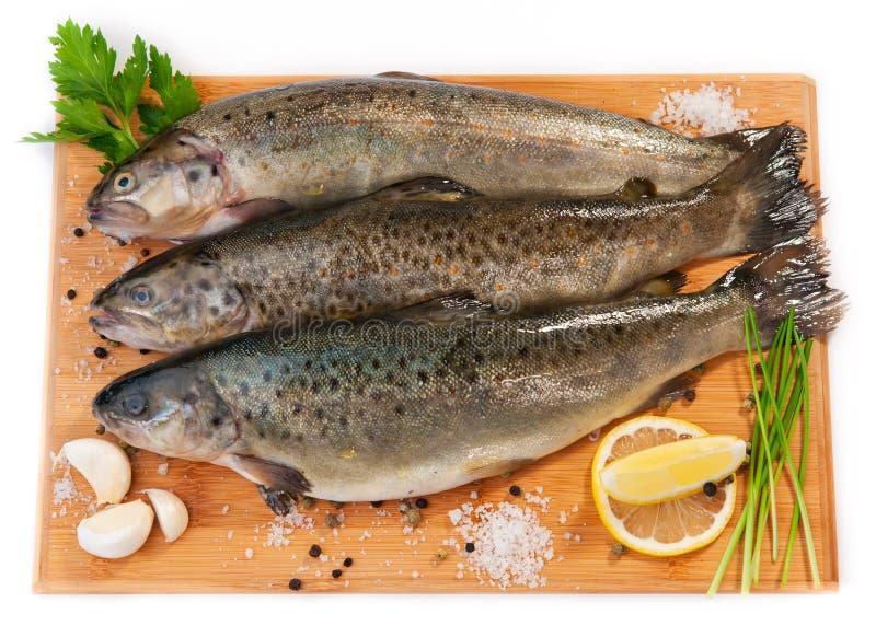 Peixes crus (truta marrom) imagens de stock