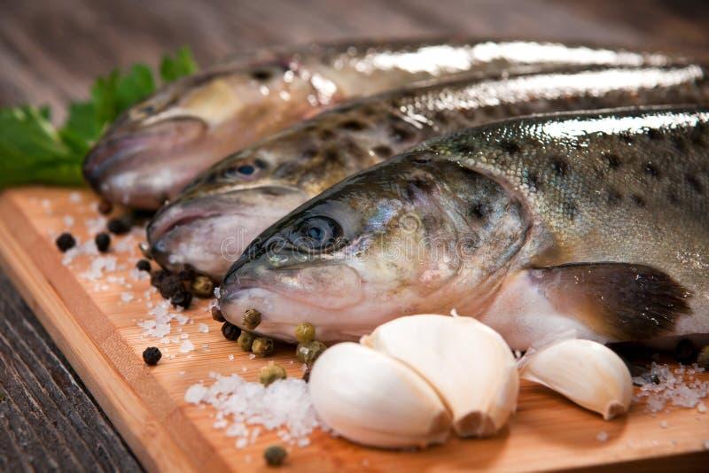 Peixes crus (truta marrom) imagens de stock royalty free