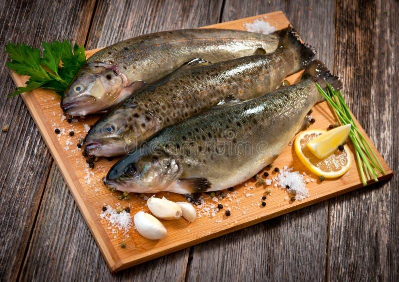 Peixes crus (truta marrom) fotos de stock