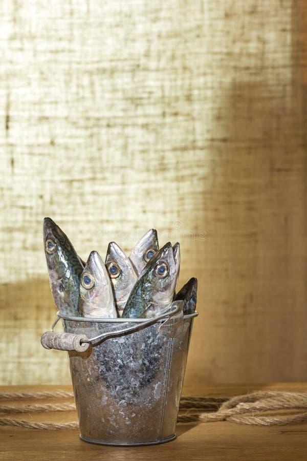 Peixes da cavala em uma cubeta do metal fotografia de stock