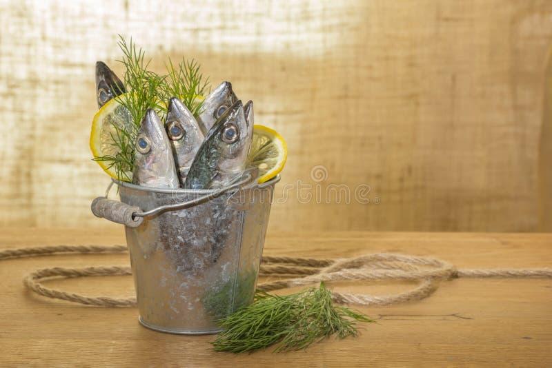 Peixes da cavala em uma cubeta do metal fotografia de stock royalty free
