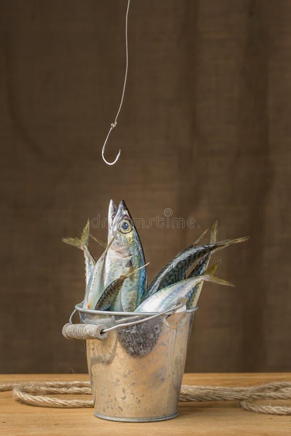 Peixes da cavala em uma cubeta do metal imagens de stock royalty free