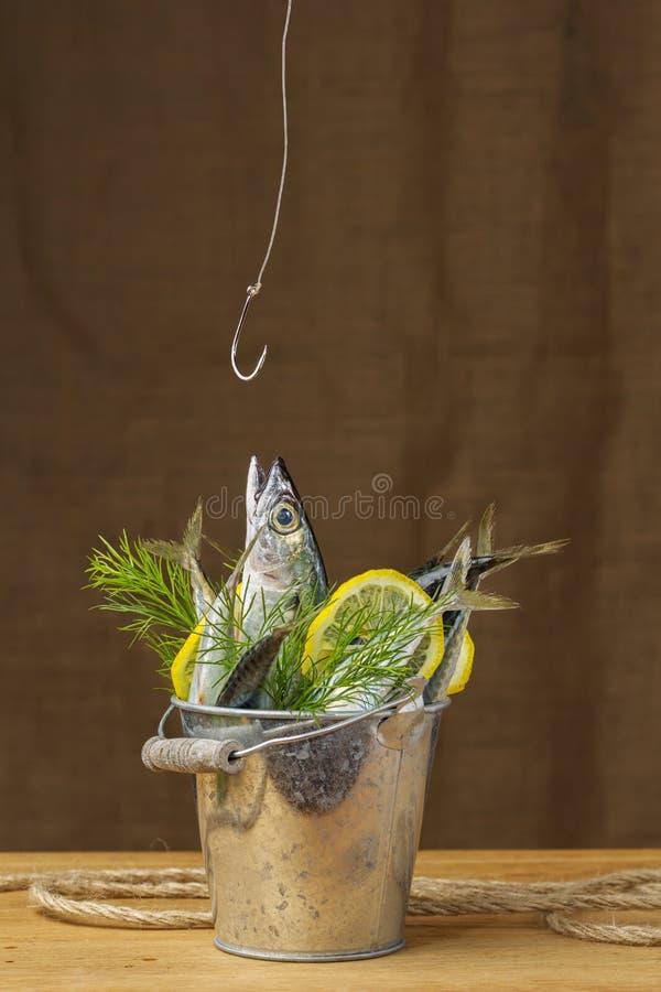 Peixes da cavala em uma cubeta do metal fotos de stock royalty free