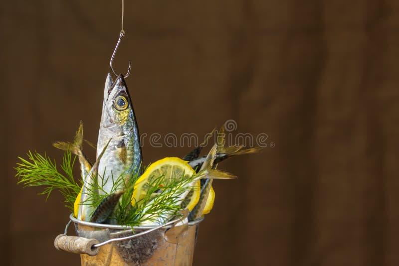 Peixes da cavala em uma cubeta do metal foto de stock royalty free