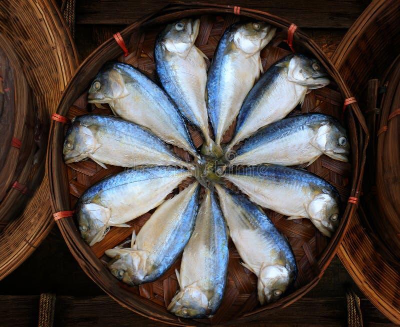 Peixes da cavala fervidos cozinhando o pré-venda pronto para comer dentro imagens de stock royalty free