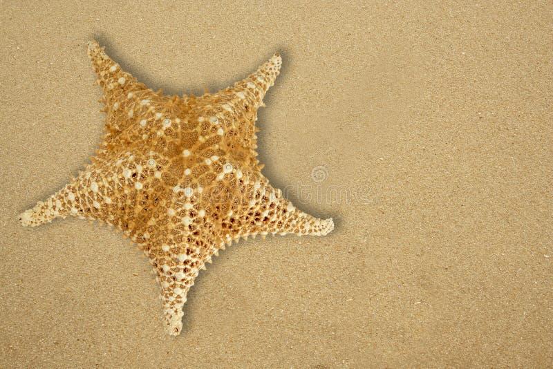 Peixes da estrela na praia imagens de stock royalty free