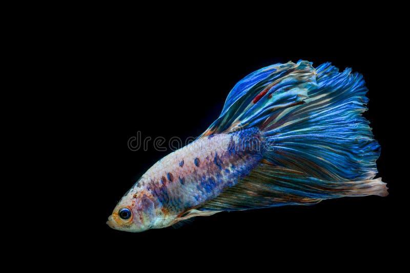 Peixes da mordida com cores bonitas fotografia de stock royalty free