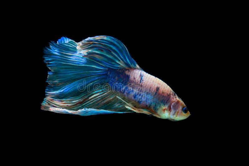 Peixes da mordida com cores bonitas imagens de stock royalty free