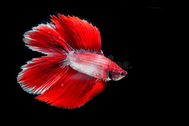 Peixes da mordida com cores bonitas foto de stock royalty free