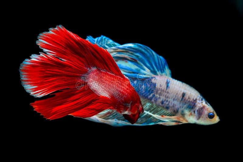 Peixes da mordida com cores bonitas fotografia de stock