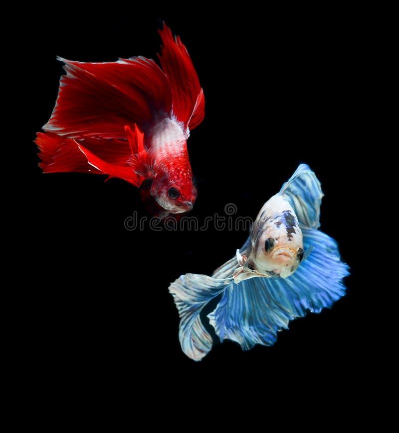 Peixes da mordida com cores bonitas imagem de stock royalty free