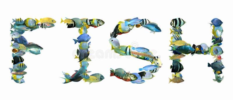 PEIXES da palavra compostos dos peixes tropicais isolados foto de stock