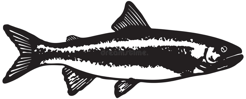 Peixes da truta ilustração do vetor