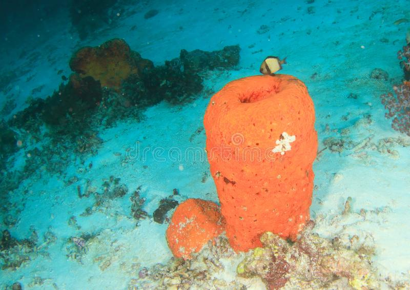 Peixes - dascyllus Reticulated imagens de stock