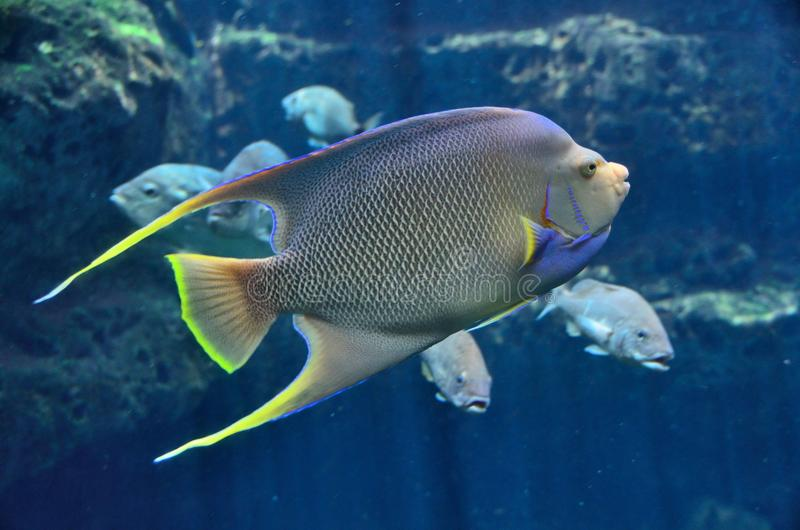 Top Peixes De água Salgada Vibrantes Da Cor Imagem de Stock - Imagem  AA27