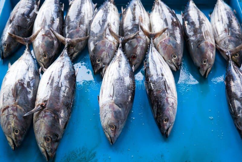 Peixes de atum crus frescos no mercado fotos de stock royalty free