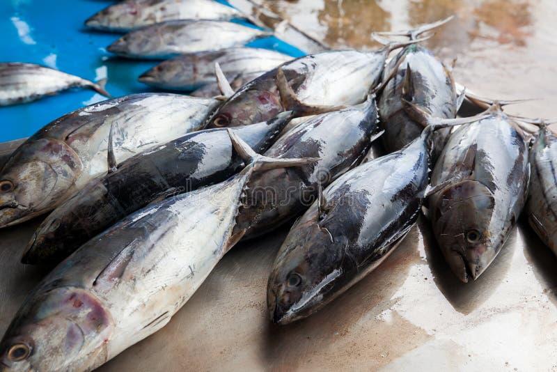 Peixes de atum crus frescos no mercado fotografia de stock royalty free