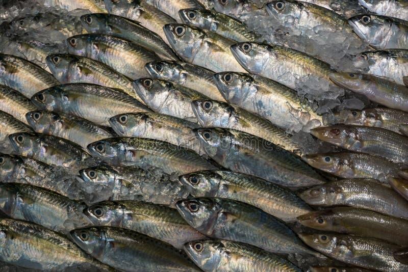 Peixes de atum frescos crus no arranjo do gelo indicado no supermercado imagens de stock royalty free
