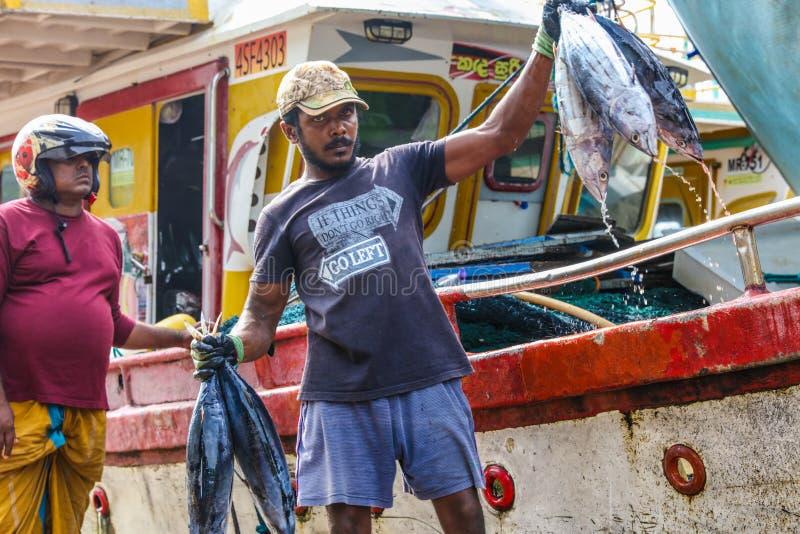 Peixes de atum que trazem para aterrar dos barcos no porto de Mirissa, Sri Lanka fotografia de stock royalty free