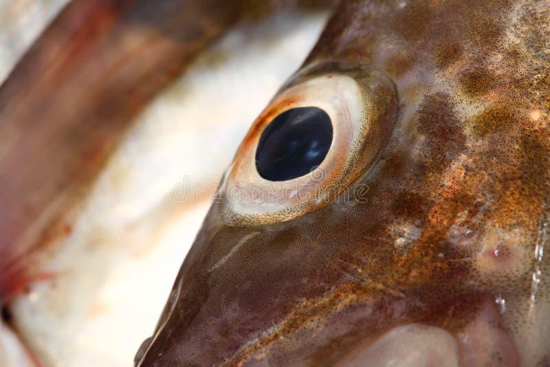 Download Peixes de bacalhau do olho imagem de stock. Imagem de fundo - 26520485