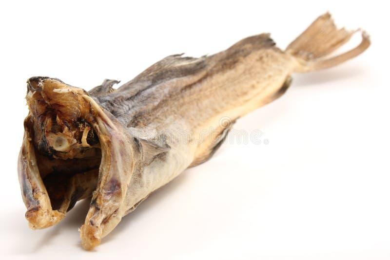 Peixes de bacalhau secos foto de stock royalty free