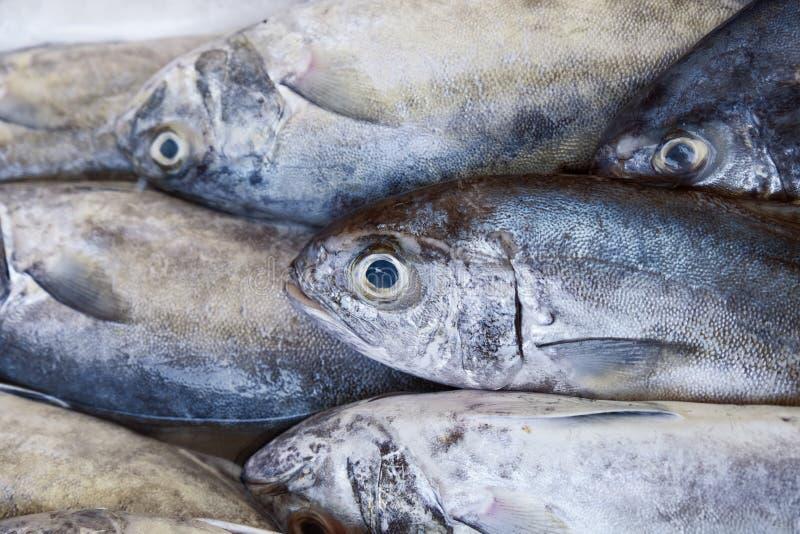Peixes de BLACK-BANDED TREVALLY no mercado imagens de stock royalty free