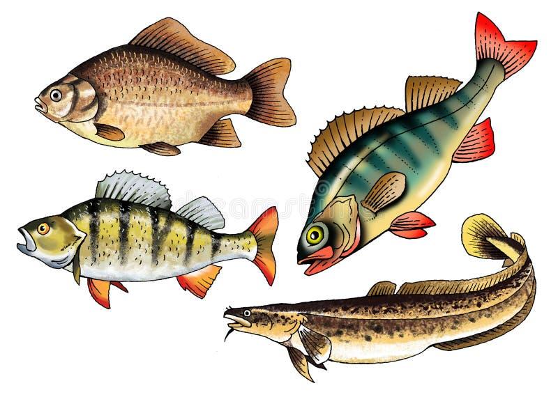 Peixes de comércio de água doce crucian da vara da lota ilustração do vetor