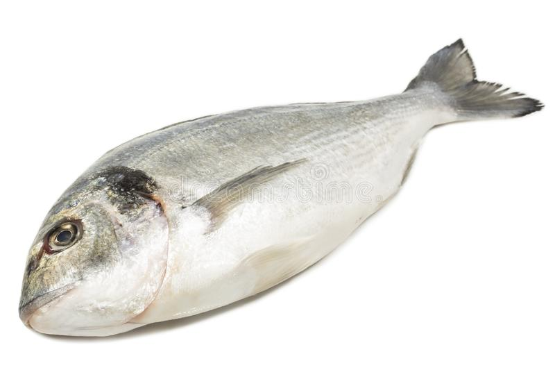 Peixes de Dorade imagens de stock royalty free