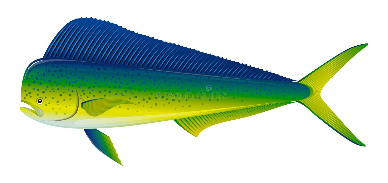 Peixes de Dorado ilustração royalty free