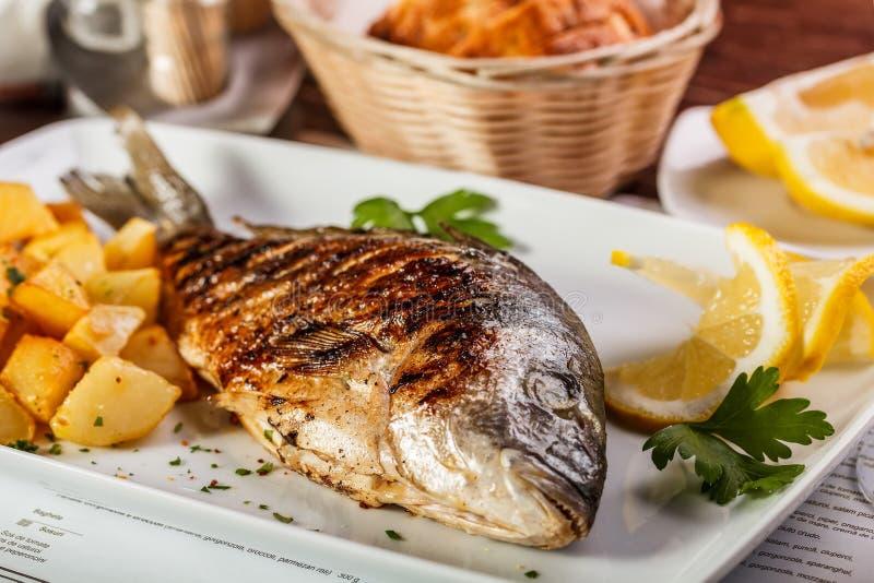 Peixes de Dorado imagens de stock royalty free