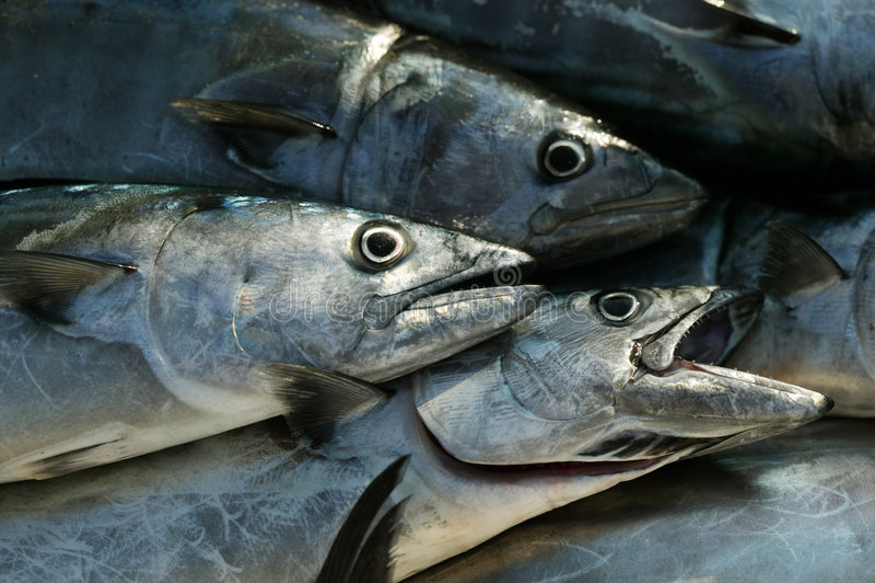 Peixes de mar fotografia de stock royalty free