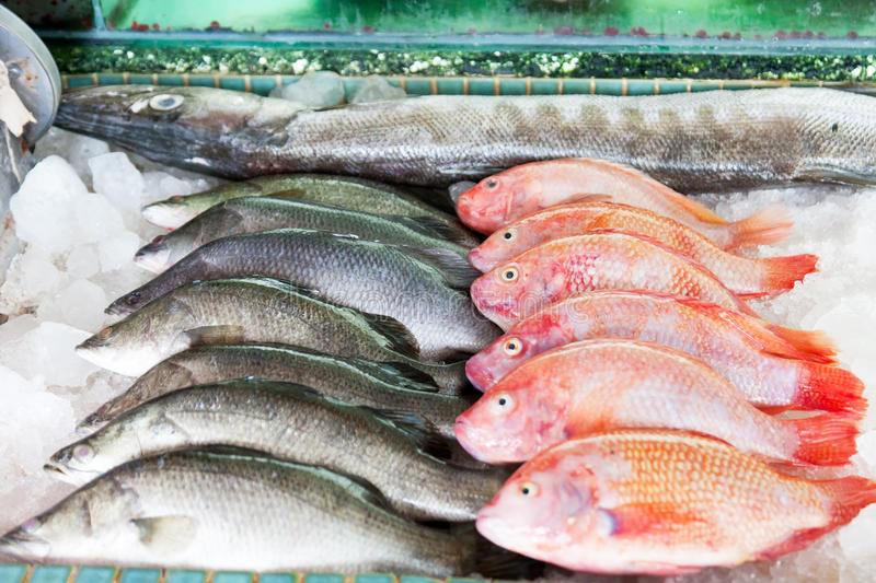 peixes de mar Fresco-travados fotos de stock royalty free